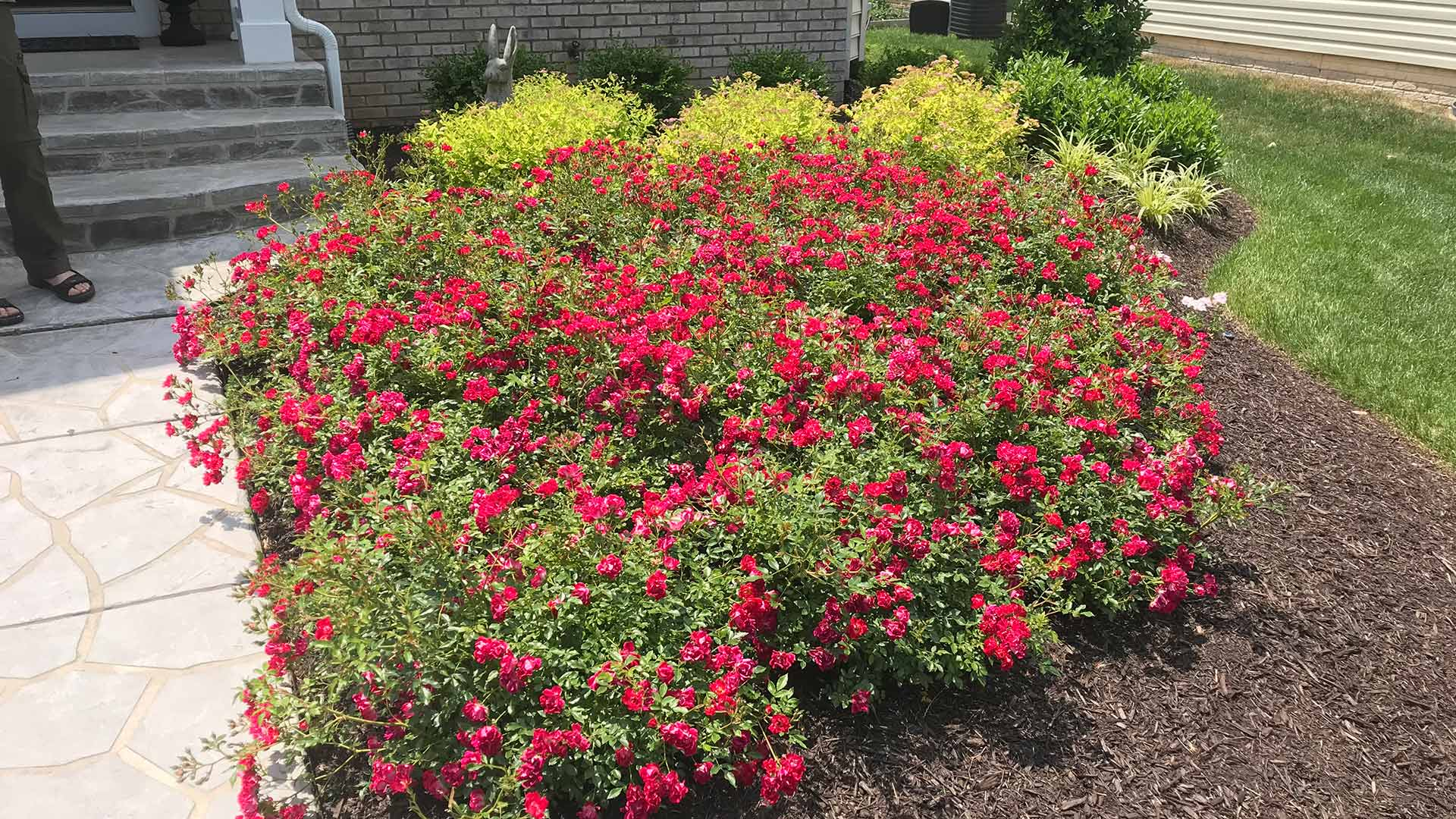 Landscape bed and annual flowers in Warrenton, VA.