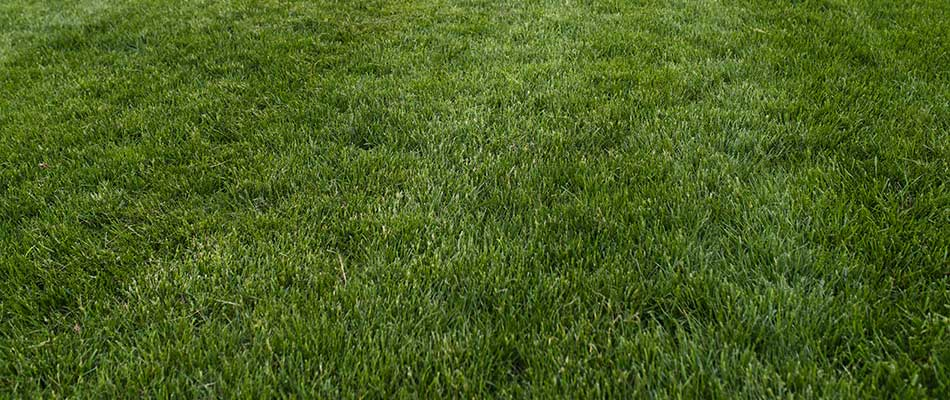 A Haymarket, VA home lawn with regular mowing and maintenance.
