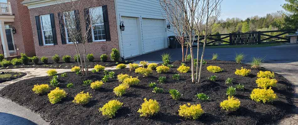 Landscape bed and mulch installation with shrubs near Gainesville, VA.