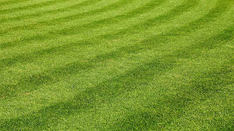Fresh, bright green yard with regular mowing and maintenance in Haymarket, VA.